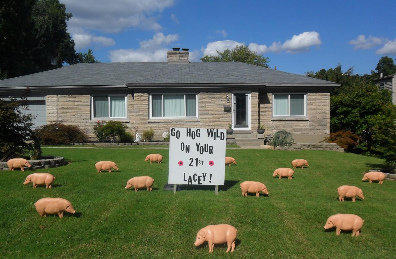 Pigs Birthday Lawn Display