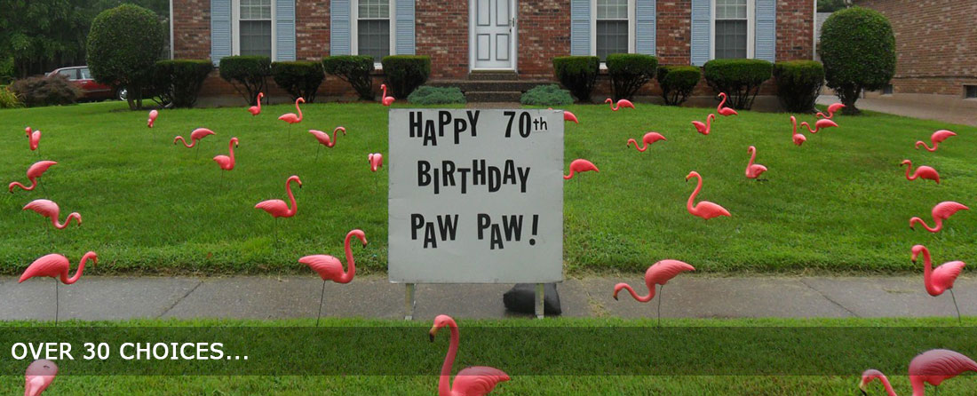 Welcome To Flamingo Greetings Birthday Anniversary New Born Surprises Valentines Lawn Decorations In Louisville KY